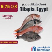 Tilapia, Egypt